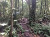 Numerous forest trails provide access to interior of the primary rainforest…