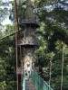 …and Borneo has the best canopy walkways in Asia!