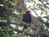 The lodge mascot is the stunning Regent Bowerbird, which are surprisingly common around the grounds.