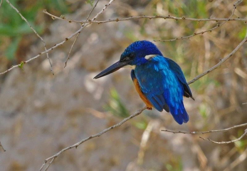 The small streams flowing into the Jemma River are a good place to look for Half-collared Kingfisher.