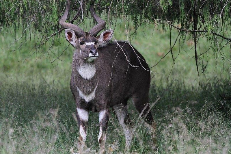 And where we are bound to have some close encounters with the endemic Mountain Nyala.