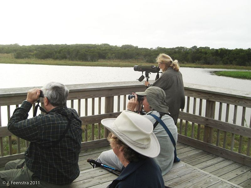 We'll often bird from platforms like the South Cape May Meadows, a freshwater marsh just over the dune from the Atlantic Ocean.