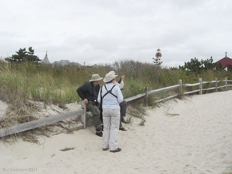 Birds can be seen from anywhere in Cape May from the forests to the neighborhoods and the beaches and dunes…