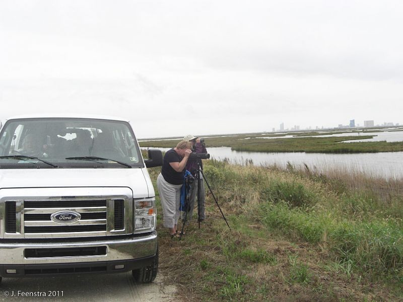 Some of our birding will also be from the van along access roads to coastal saltmarsh habitat…