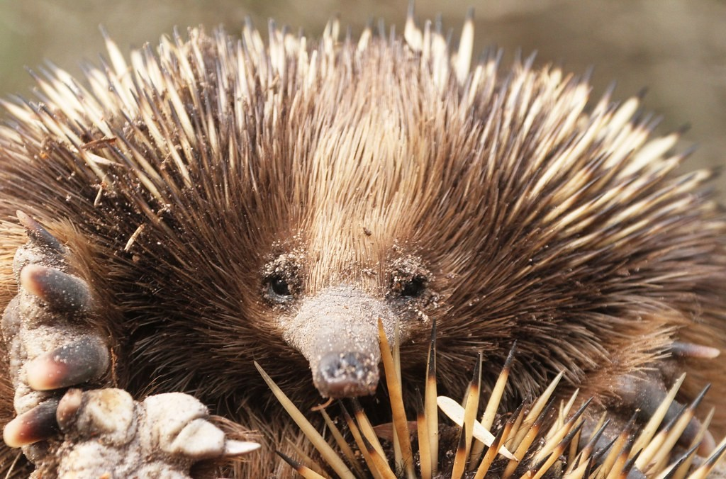 and perhaps even an Echidna or two.