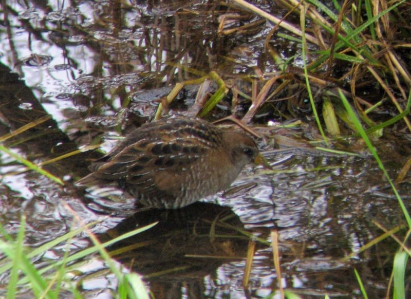 …and surprises await, from a Sora in a puddle…