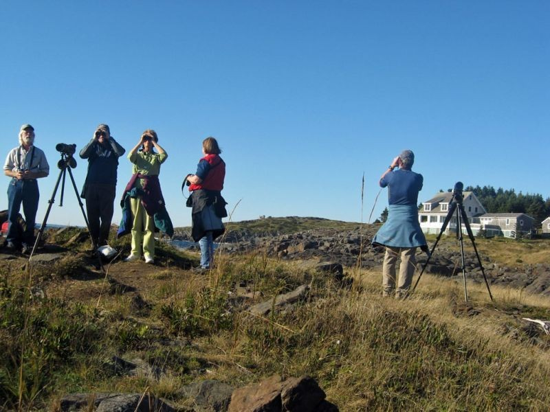 Birders flock to Monhegan to see migrants…