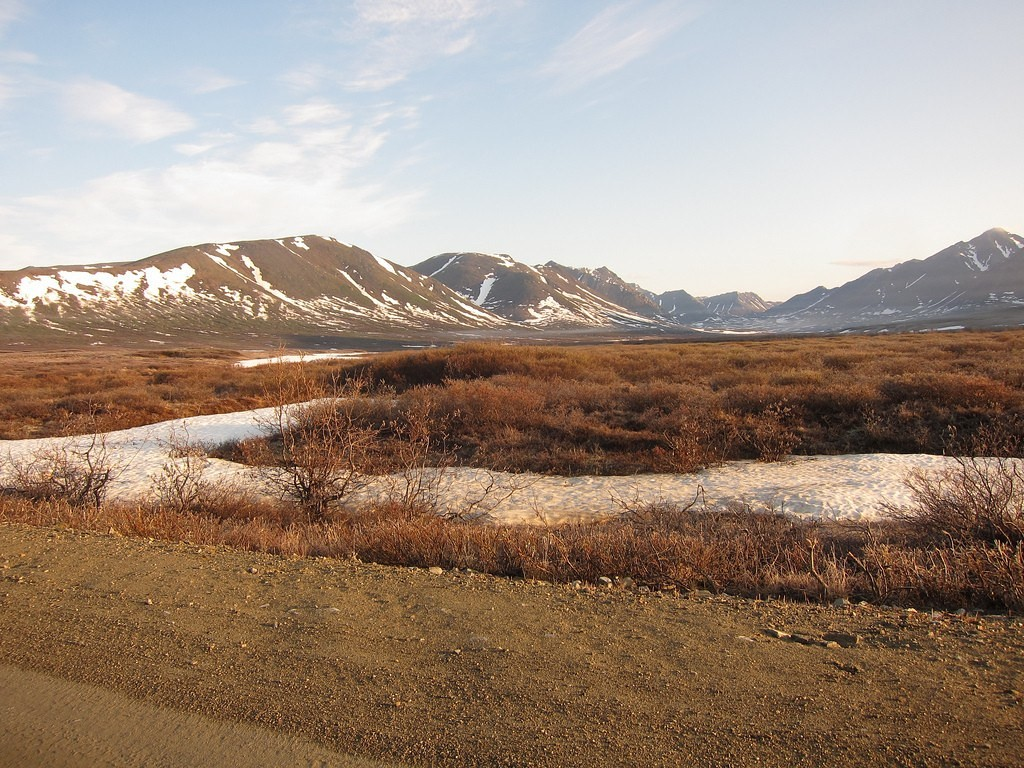 We'll drive the roads out of Nome in search of birds such as…