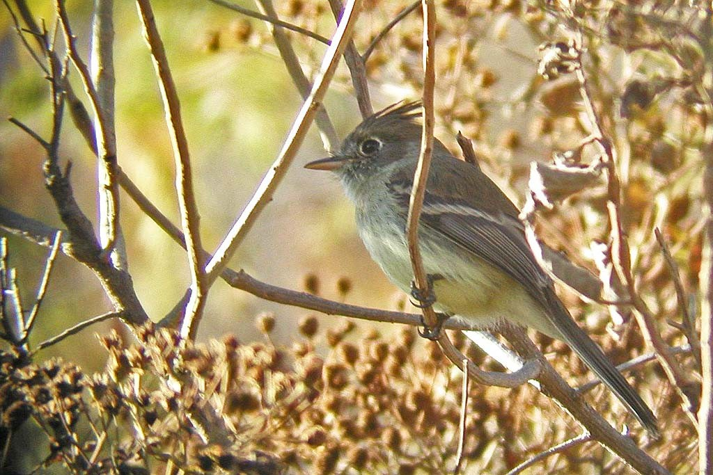 …but it's still a birding tour after all, and here we'll look for the unobtrusive Pileated Flycatcher…