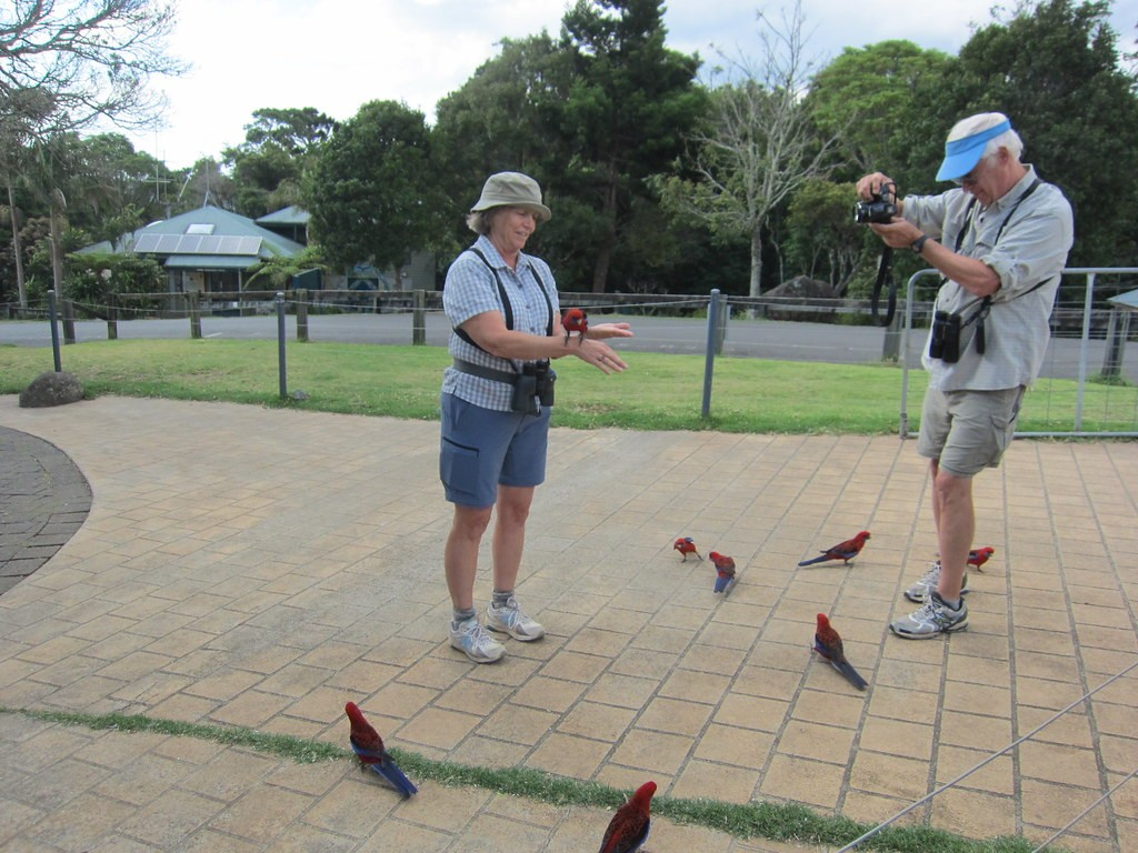 Here the birds are amazingly tame,