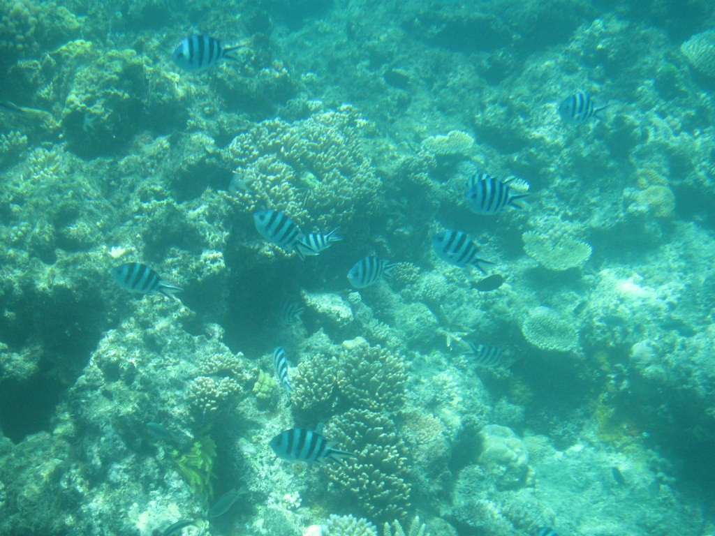 and the snorkeling from shore provides a fantastic opportunity to view the reef.