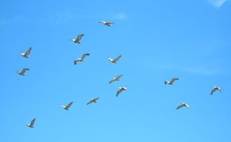 The delta is also home to the world's largest gathering of Dalmation Pelicans.