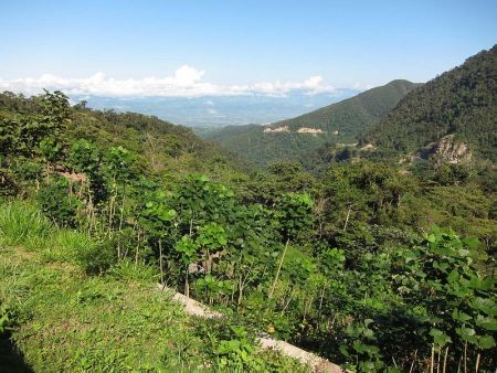 We'll start near the town of Tarapoto, where an outlying ridge harbors healthy forest.