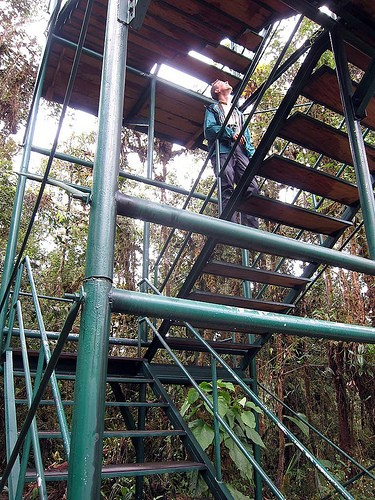 The lodge has a canopy tower that overlooks the short, dense canopy at 7700 feet elevation.