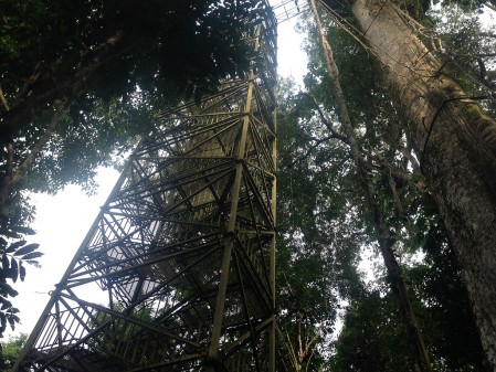 The 200 steps up the canopy tower will give us a bird's eye view…
