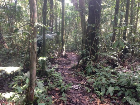 Numerous forest trails provide access to interior of the primary rainforest...