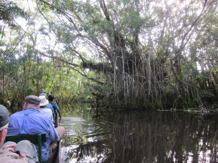 Much of our birding will be done while being paddled around in canoes through the flooded forest (known as várzea). (gb)