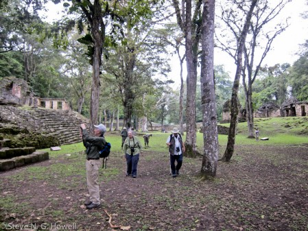The ruins at Yaxchilán offer a great backdrop to some great birding