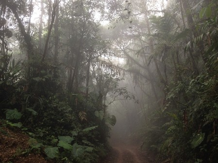 We'll experience the atmosphere and high diversity of some cloud forest...
