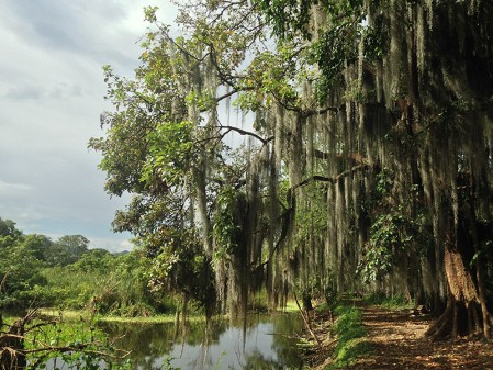 ...and also visit wetlands like the Sonso lagune near the city of Buga...