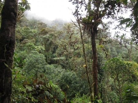 ...and cloud forest... (photo by Richard C. Hoyer)