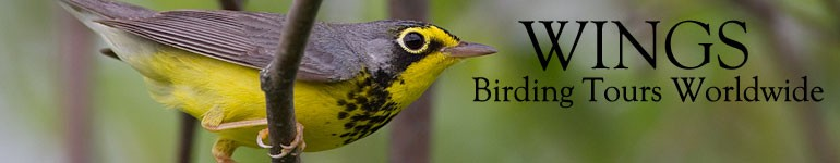 WINGS Birding Tours Worldwide